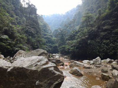 Bogor Halimun National Park Tour 02
