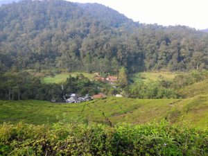 Bogor Halimun National Park Tour 11