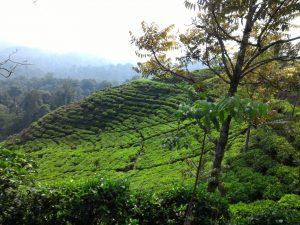 Bogor Halimun National Park Tour 14