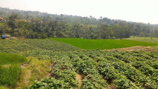 Bogor Halimun National Park Tour 33