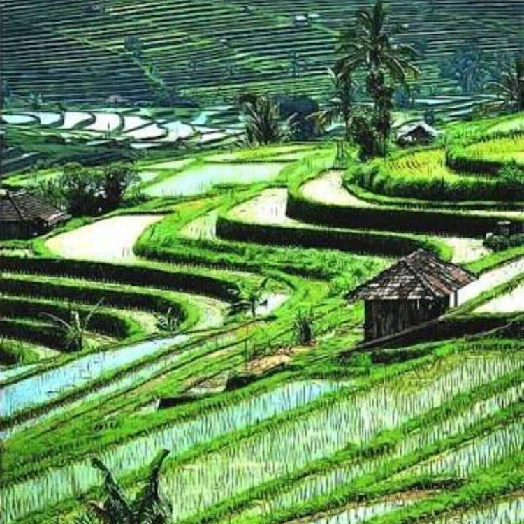 Bogor Halimun National Park Tour 41